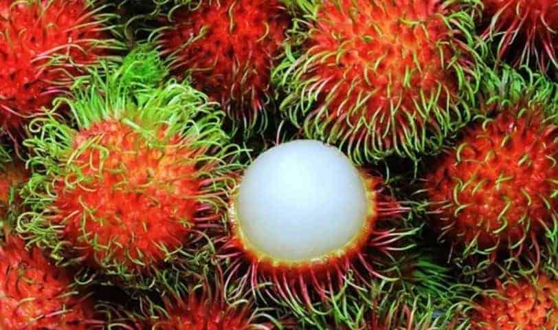 Vietnam'ın Tropikal Meyveleri 1