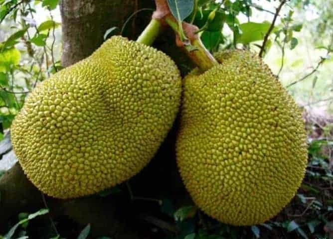 Vietnamın tropikal meyveleri